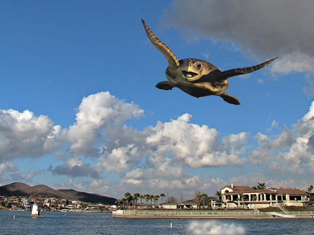 Flying Turtle sighting expected this Sunday
