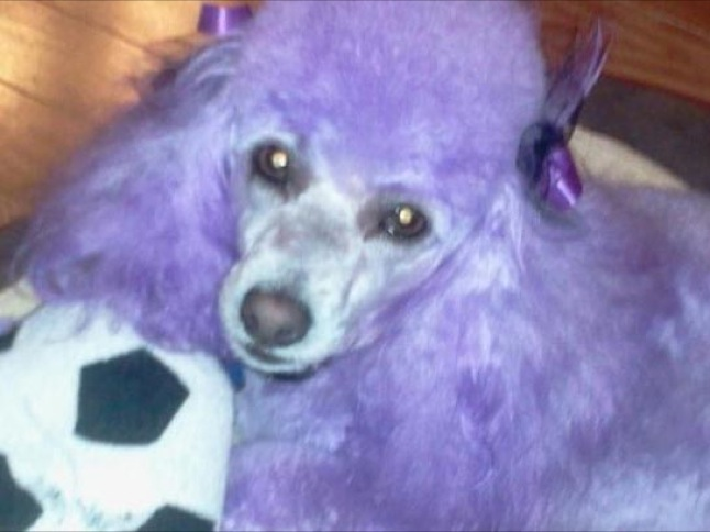 It's a Dog's Life: Purple pals and Three Amigos