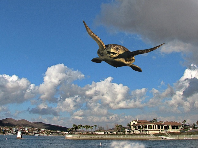 Flying turtle meme - photo#8