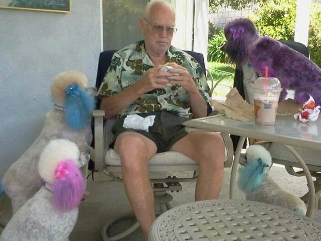 Pretty poodles drool over 'marv-elous' meal