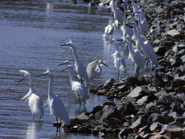 Wetlands tours to provide organized bird-viewing