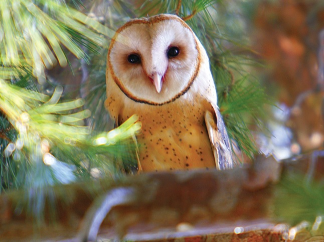 On August 4, shout hoo-hoo-HOO-ray for owls