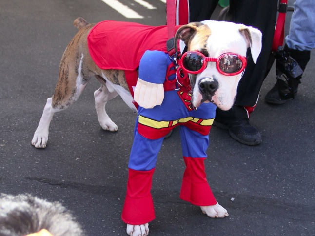 Pet Parade lets owners 'put on the dog'