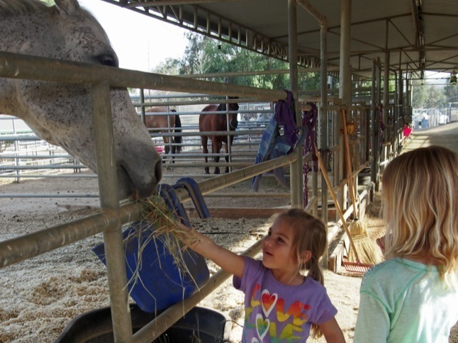 Equestrian Center a positive place for kids, adults