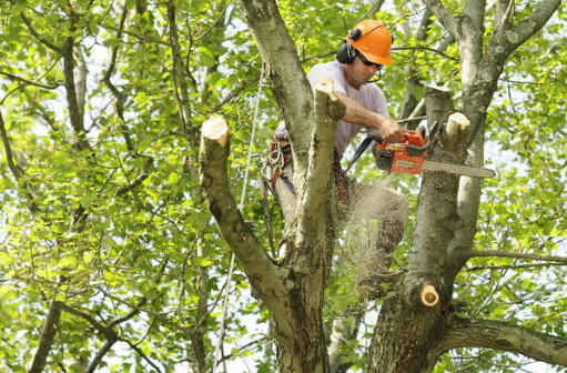 Beware of trimming trees during nesting season