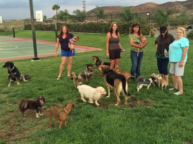 It really is 'a dog's life' in Canyon Lake