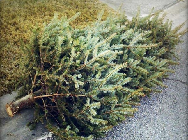 Disposing of Christmas trees and batteries