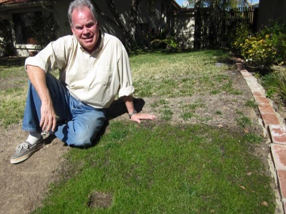 Reducing phosphorus is reason for grass recommendation