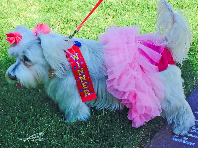 Costumed pets parade their Halloween spirit!