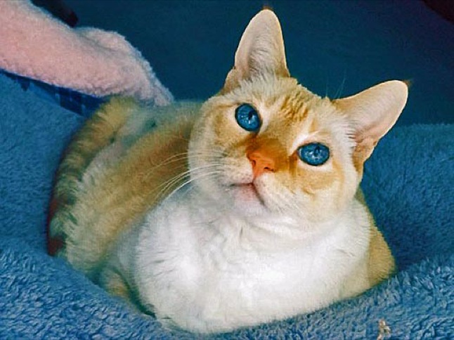 All About Pets: Meet Butterscotch: a cat in trouble