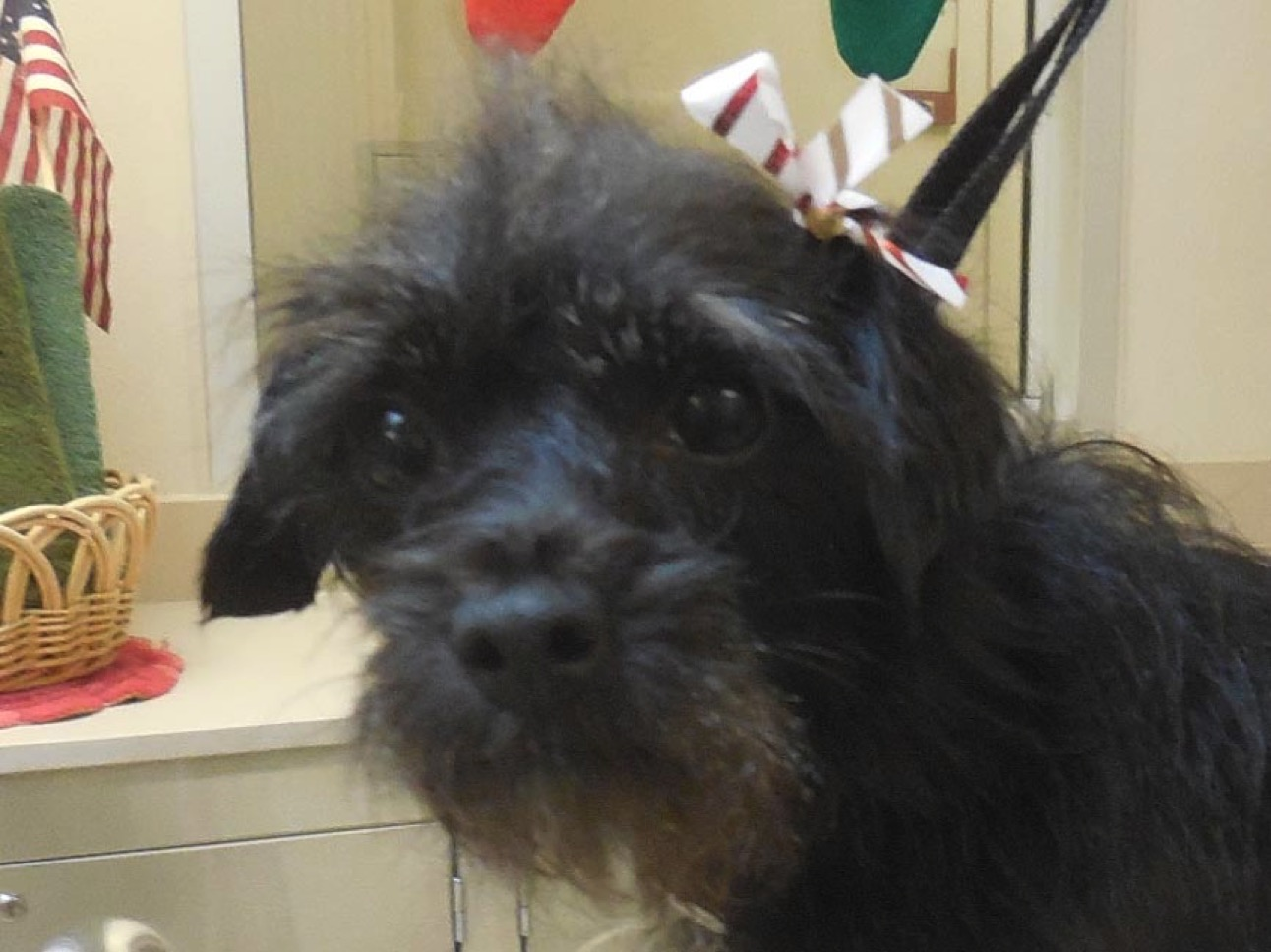 Adopt-a-Pet: Margarite and Natalie
