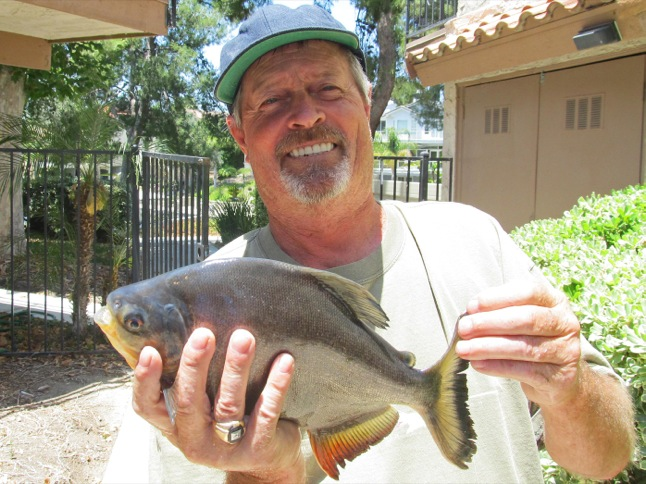 Toothy Pacu caught in East Bay