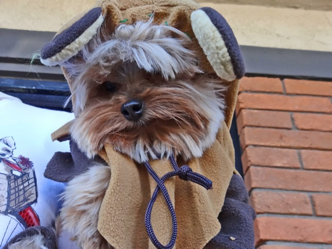 Dogs parade their Halloween costumes!